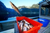 Seefischerei der Österreichischen Bundesforste am Hallstätter See