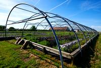 Gugumuck Schneckenfarm-170529-0588 1_kulinarik